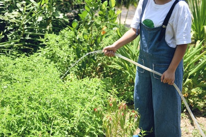 Gardening woman hand holding pouring water on plant with rubber tube garden in the summer