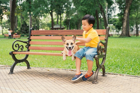 Children and dogs outdoors. Asian little boy enjoying and playing in park with his adorable Pembroke Welsh Corgi.