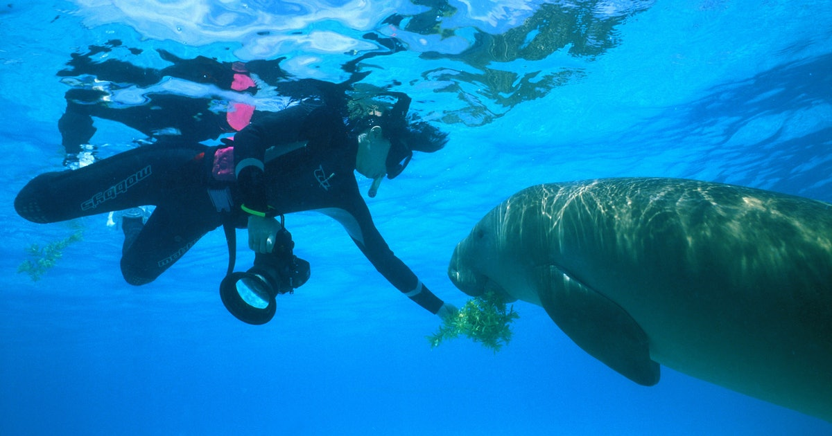 A famous baby dugong in Thailand died after ingesting plastic waste in the ocean
