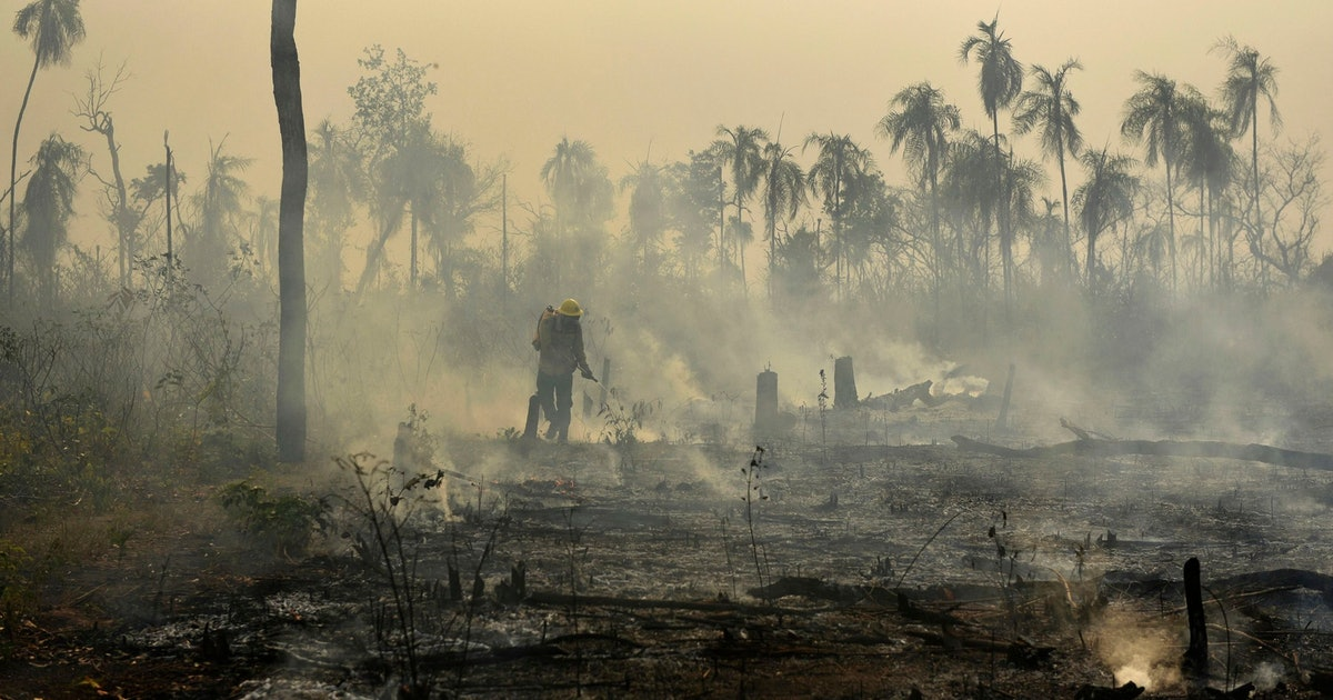 Amazon rainforest fires put thousands of species, indigenous communities, and the earth's atmosphere at risk