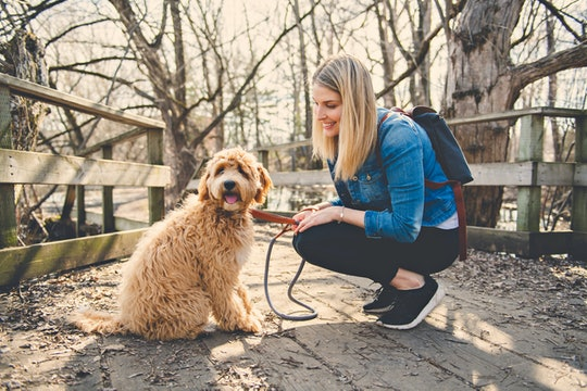 Happy Labradoodle Dog and woman outside at the park