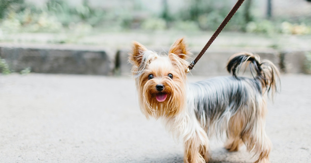 How To Get Your Dog To Stop Pulling On Their Leash, According To Experts
