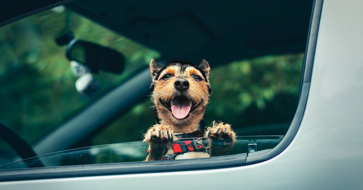 How To Get Dogs To Like Car Rides If They're A Bit Anxious About Them, According To Experts