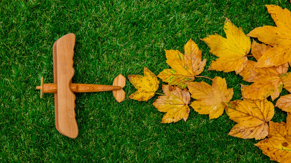 Golden autumn maple leaves and wooden plane on green grass. Above view