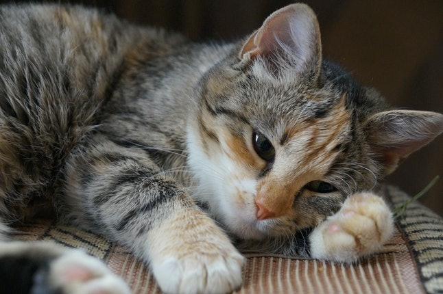 sad cat,the cat sleeps