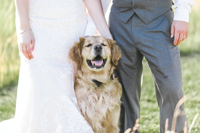 Wedding dog and couple celebrate