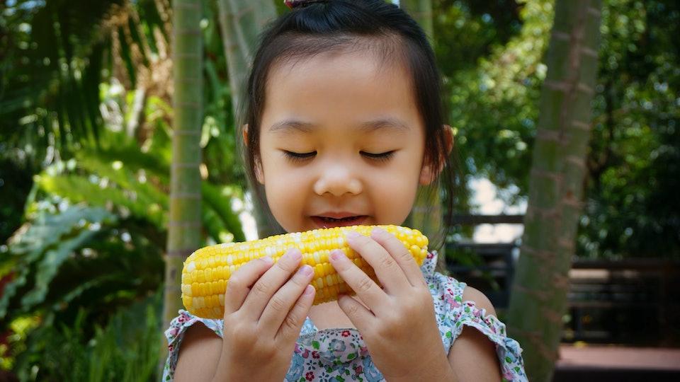 Little girl kid is eating corn.Kid is  holding corn.