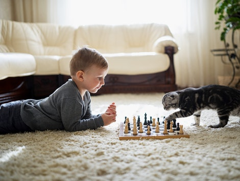 little boy plays with cat chess lying on the floor