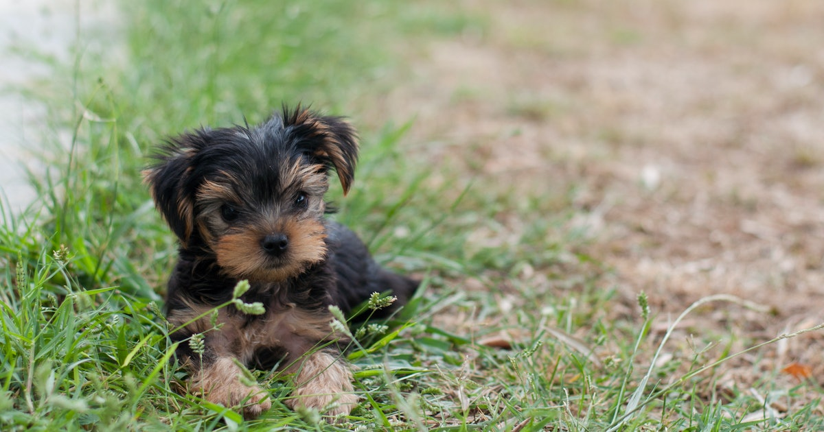 10 Low-Maintenance Dog Breeds To Choose From, Because Your Life Is High-Maintenance Enough
