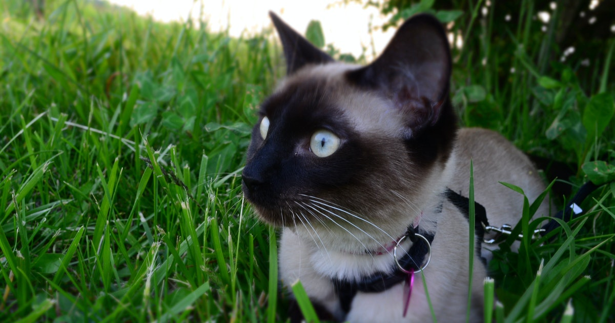 5 Things You Can Teach A Cat To Do That Dogs Can T Do