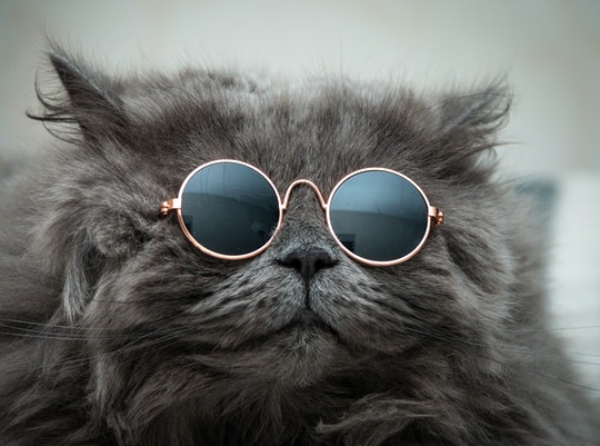 funny cat in round sunglasses close-up