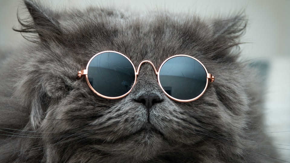 funny cat in round sunglasses close-up