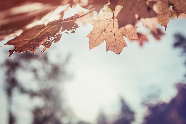 Red leaf against blue sky. Autumn concept.