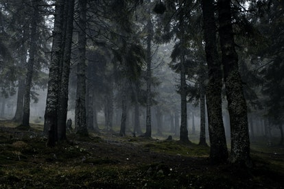 Foggy dark forest with a black slope