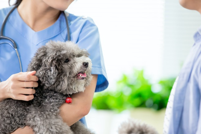 close up of young female veterinarian doctor smile and hold the dog