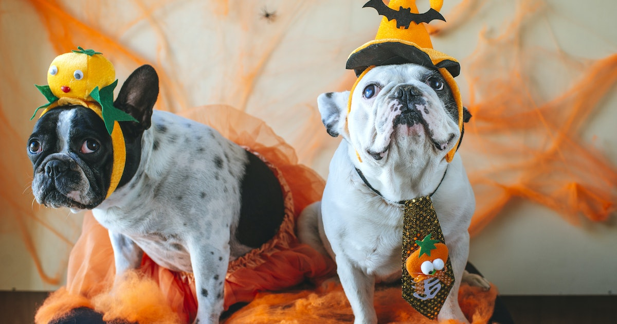 36 Captions For Your Dog's Costume, Because It's Ruff Being This Cute