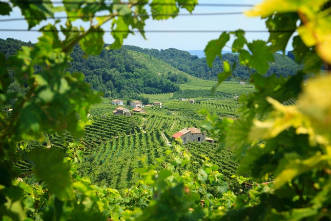 Conegliano Valdobbiadene Region, Italy, - Region in northern Italy famous for its wineries producing original Prosecco Sparkling White Wine