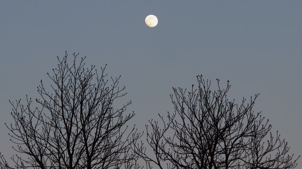 White full moon against black silhouettes of tree branches in the evening sky