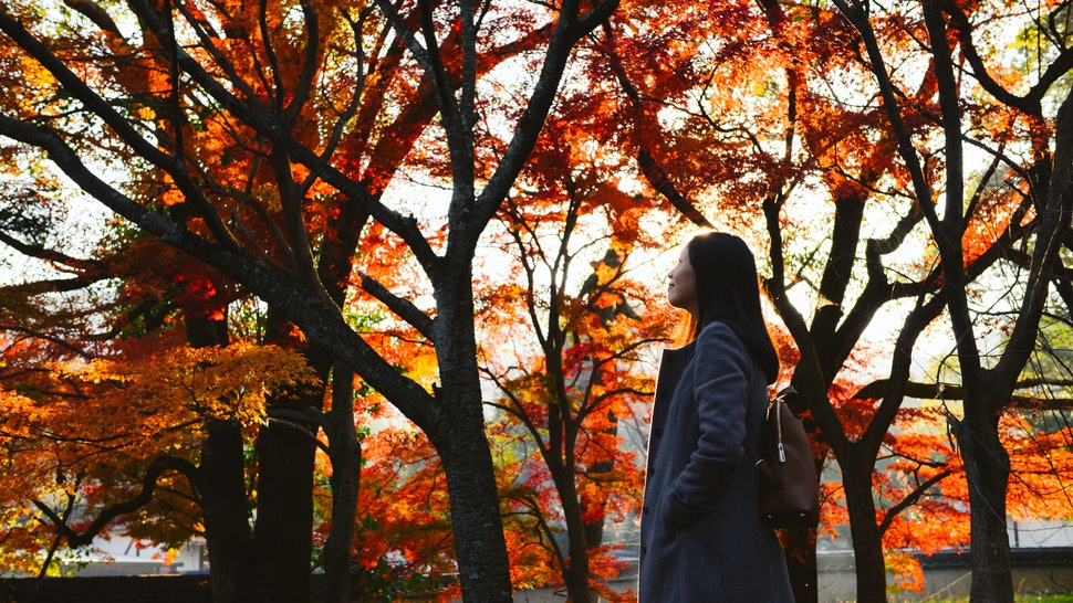 Asian girl looks up in the sky, with background of colorful autumn maple trees in Japanese garden, Kyoto, Japan