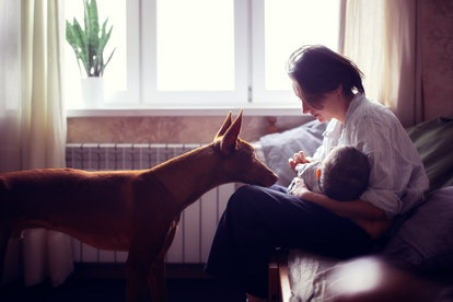Mom breastfeeds the baby on the bed and next to the dog of Pharaoh's breed, in the real room, gray tone and lifestyle, my mother's day