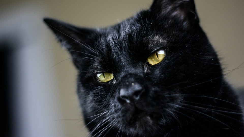 Black House Cat
