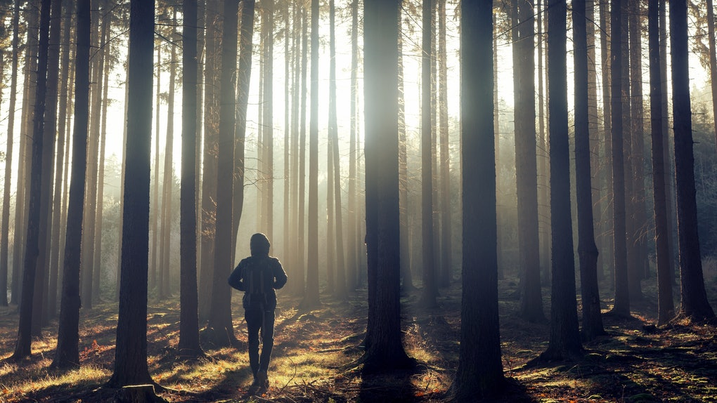 One man in the foggy forest at sunrise.
