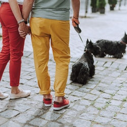 Cropped photo of adult man and woman holding hands and walking outdoors with two black scotch terriers while using leashs