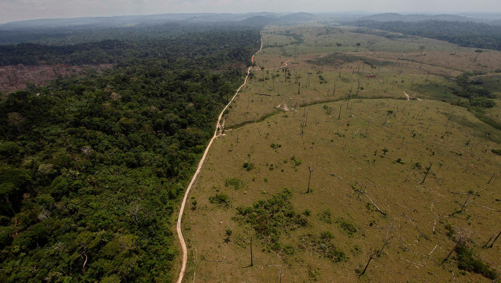 A deforested area near Novo Progresso in Brazil's northern state of Para. Brazil detained a land-grabber in Para state thought to be the Amazon's single biggest deforester, according to the country's environmental protection agency. The Brazilian Institute of Environment and Renewable Natural Resources said Ezequiel Antonio Castanha, detained, operated a network that illegally seized federal lands, clear-cut them and sold them to cattle grazers