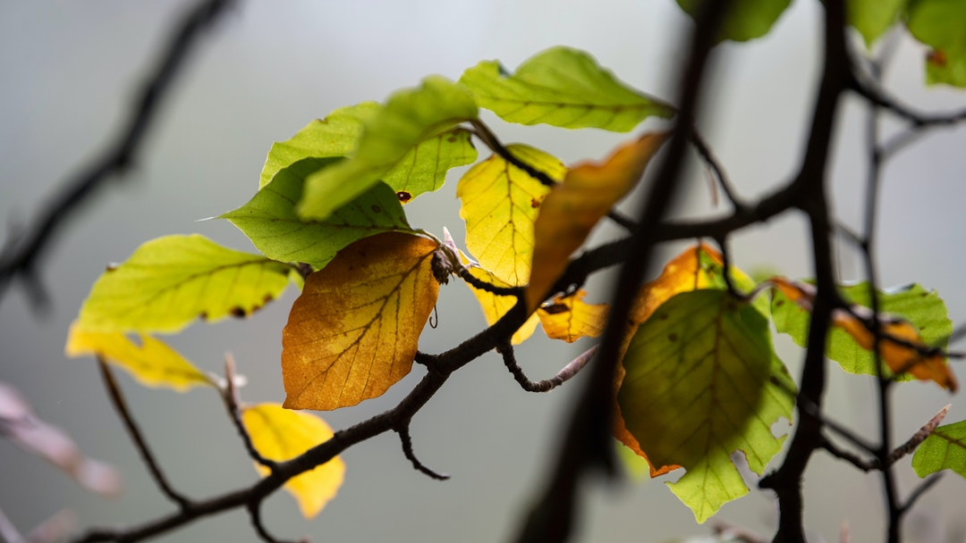 The leaves of a tree near the Isar River are coloured in autumn in Munich, Germany, 19 October 2018. Meteorologists announced falling temperatures and light rain showers for the upcoming week.