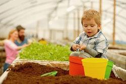 summer gardening. small boy gardening in summer. summer gardening concept. summer gardening of famil...