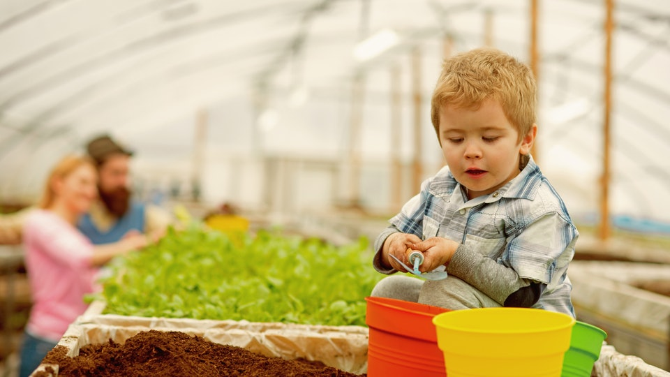 summer gardening. small boy gardening in summer. summer gardening concept. summer gardening of family in greenhouse. nature needs your care