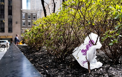 A plastic bag is seen caught in a bush in New York, New York, USA, 02 April 2019. The New York State...