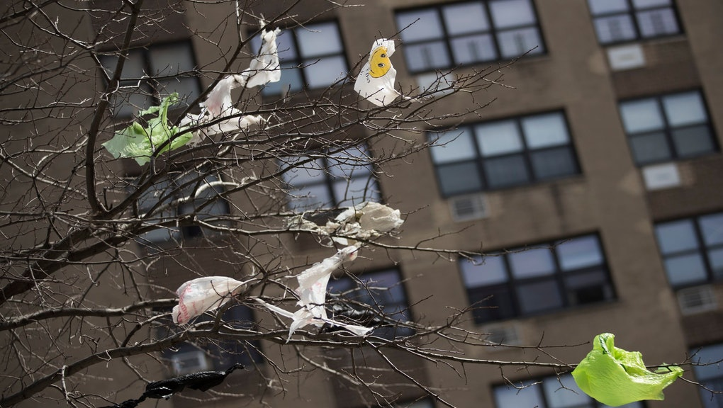 Plastic bags are seen stuck to the branches of a tree in the East Village neighborhood of Manhattan, . Two New York lawmakers say Wednesday that they're optimistic that a ban on single-use plastic shopping bags could be included in the spending plan that's due Sunday