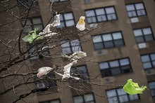 Plastic bags are seen stuck to the branches of a tree in the East Village neighborhood of Manhattan,...