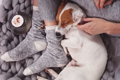 Cozy ,lazy day at home, cold weather, warm blanket. Dog sleeping on female feet. Relax, carefree, comfort lifestyle.