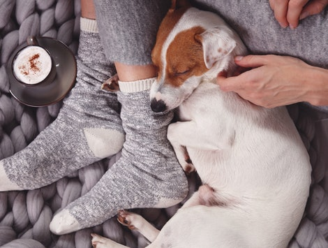 Pumpkin Spiced Lattes For Dogs