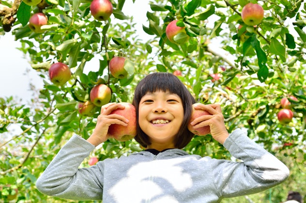 Girls enjoy picking apple