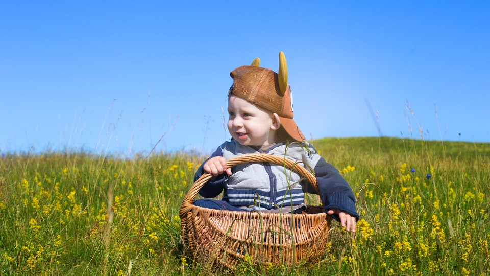 portrait of adorable baby toddler sitting in picnic basket on rural field with flowers in south sweden