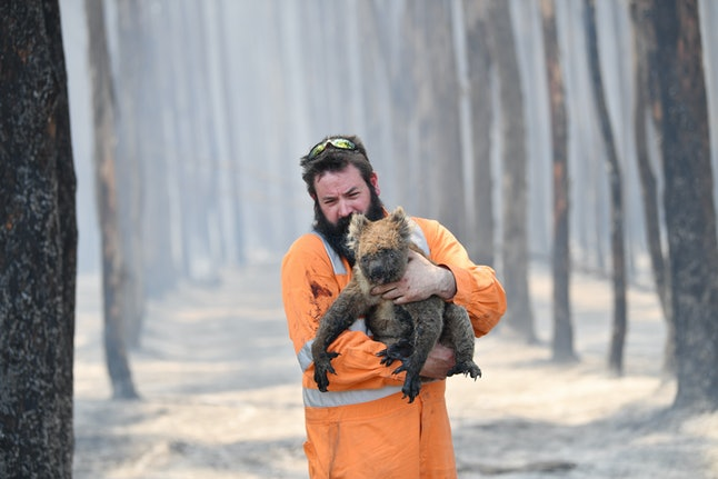 Adelaide wildlife rescuer Simon Adamczyk holds a koala he rescued at a burning forest near Cape Borda on Kangaroo Island, Australia, 07 January 2020. A convoy of Army vehicles, transporting up to 100 Army Reservists and self-sustainment supplies, is on Kangaroo Island as part of Operation Bushfire Assist at the request of the South Australian Government.