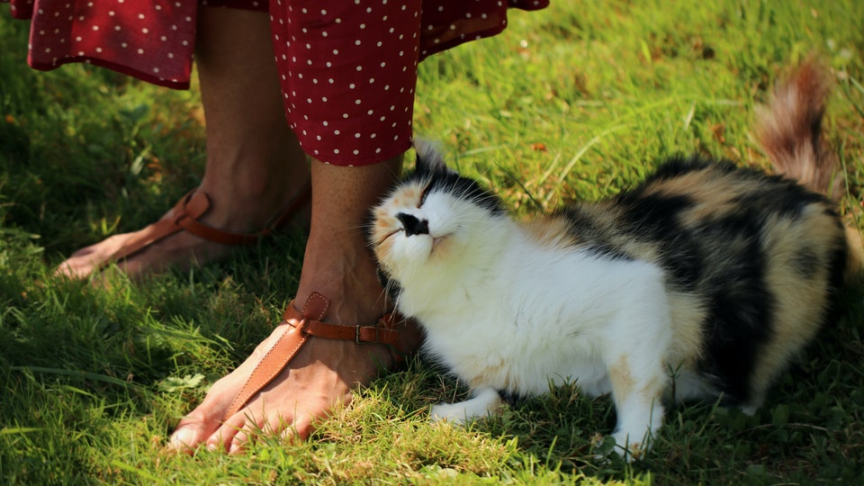cat snuggling up to woman's feet