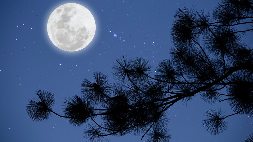 Full moon with starry over pine  branches . Romantic night.
