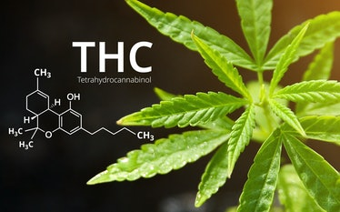 Tetrahydrocannabinol or THC molecule formula with Marijuana background, Cannabis sativa