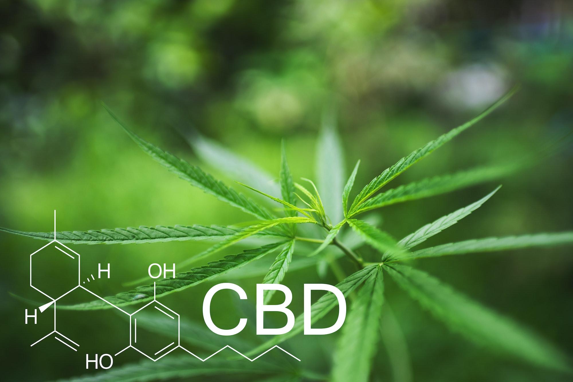 Cannabidiol chemical structure on green cannabis leaf background