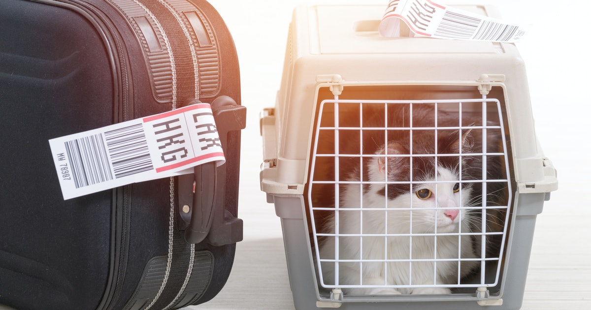 Are Service Animals Allowed On Planes? The Rules Could Change Soon