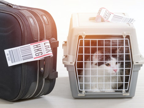 A new rule could limit the kinds of animals allowed on airplanes as service animals.
