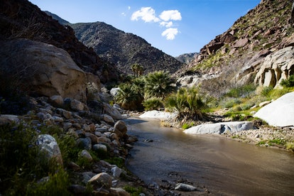 A palm grove grows along a small stream in a canyon of the Anza-Borrego Desert State Park, East of S...