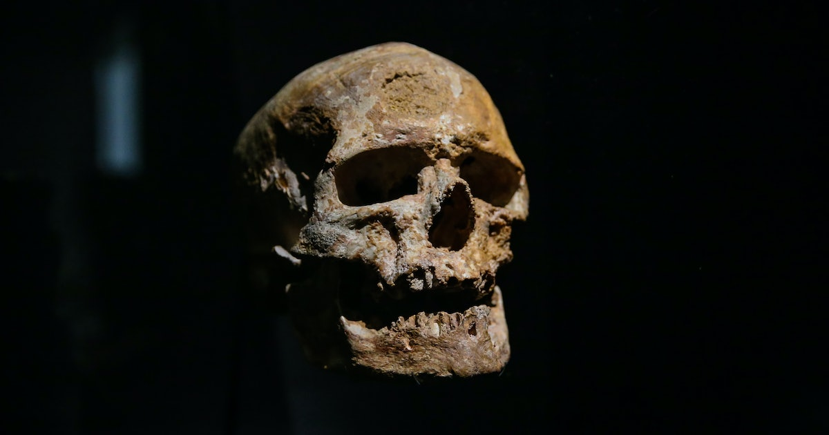 Ancient human IQ can't be measured in the brain, but somewhere else — study