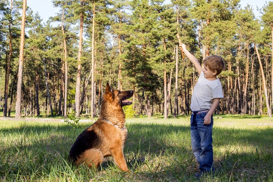 a little boy playing with his loyal german shepherd outside in the grass
