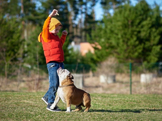European boy playing with his English bulldog.