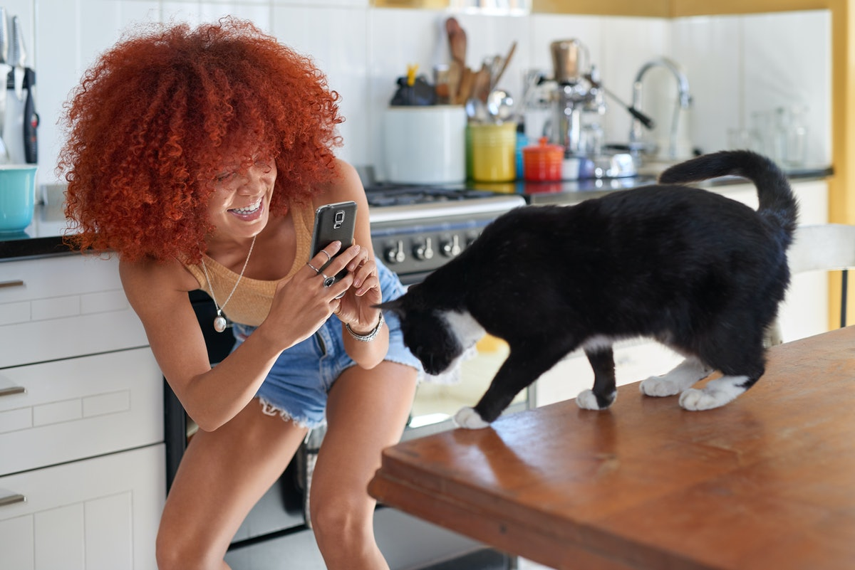 A woman laughs while taking a photo of her cat standing on the kitchen counter.